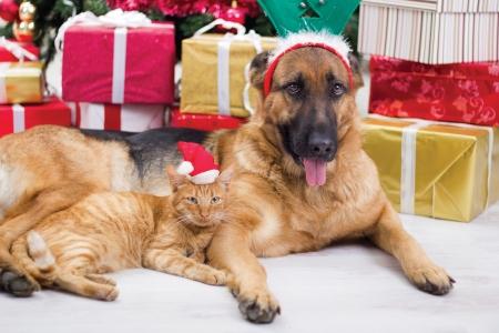 chien et chat dans la nuit de Noël