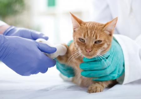 Kleine Katze mit gebrochenem Bein Standard-Bild - 24365390