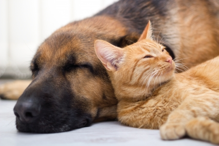 cat and dog together lying on the floor and sleeping Standard-Bild