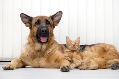 cat and dog together lying on the floor Foto de archivo