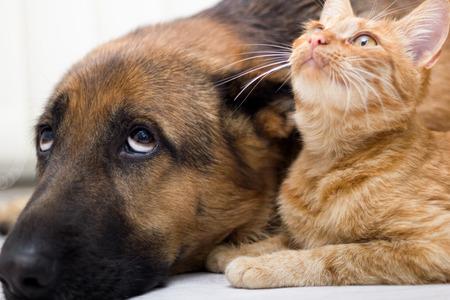 close up kat en hond samen liggend op de vloer Stockfoto