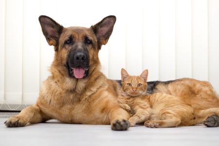 close-up een mooie kat en hond samen liggend op de vloer