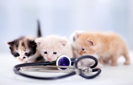 małe kocięta z stetoskop
