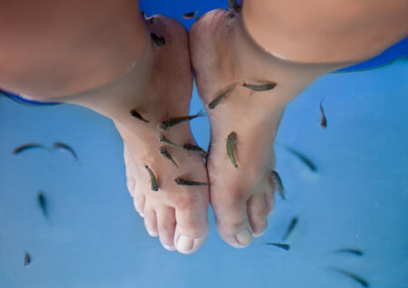 Pedicure fish spa. Rufa garra fish spa treatment photo