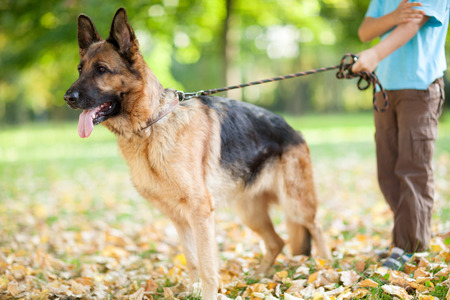 little boy in the park with a German Shepherd photo
