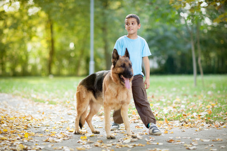 german shepherd on the grass: young boy relaxing and walking with  German Shepherd in park