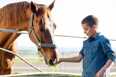 Child feeding beautiful brown horse in a farm Standard-Bild