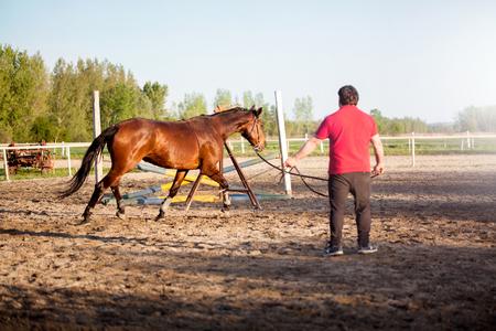 entraîneur de cheval avec un étalon brun