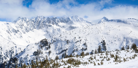 snowcapped: peaks of pine trees covered with snow, wonderful mountain landscape