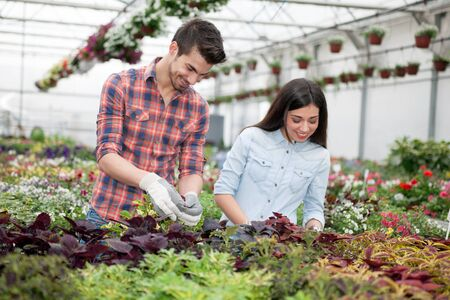 smiling woman in a greenhouse: Young smiling florists man and woman working in the greenhouse