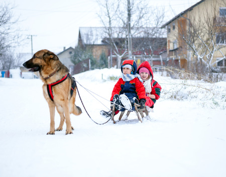 caucasian shepherd: winter fun,Sledding,snow, children and dog on a wooden sleds playing