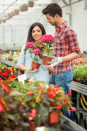 florists: florists man and woman working in the greenhouse