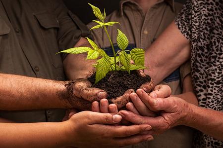 mains sales de la famille d'un fermier, tenant une jeune plante, concept de protection de l'environnement