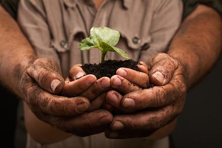 manos sucias: manos sucias de una familia de agricultores, la celebraci�n de una planta joven, el concepto de conservaci�n del medio ambiente