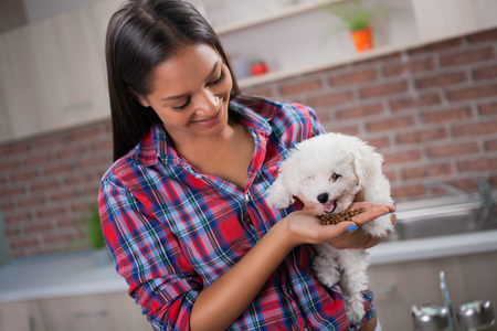 Picture of beautiful young girl at kitchen with dog Stock Photo