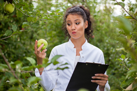 agronomist: agronomist in apple orchard and checking the health of the apple trees