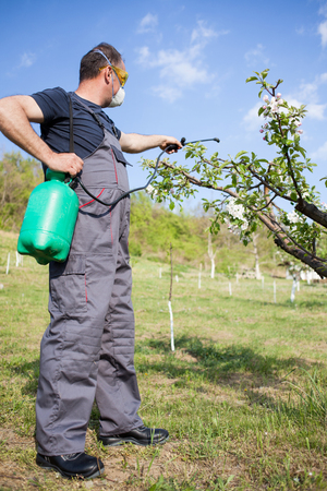pesticides: Agricultural worker spraying pesticide on fruit trees Stock Photo