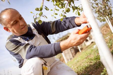 agriculteur mettant Wire Cage autour de l'arbre fruitier