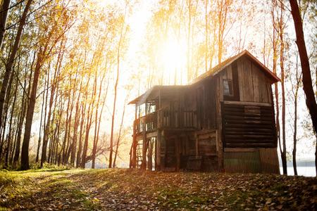 paysage de forêt d'automne avec le soleil bas illuminant les petits arbres