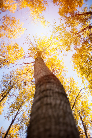Golden autumn scene in the forest with sun