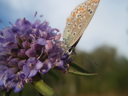 The butterfly on a flower photo