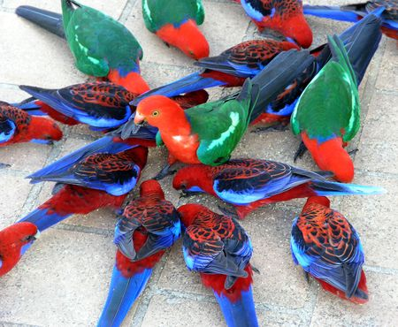 colorful lorikeets Imagens - 3151354