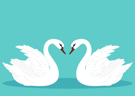 A pair of swans. Swan.