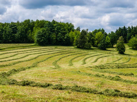 Mowed spring field  Czech Republic Stock Photo - 20907325