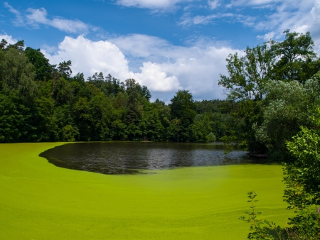 water pollution: Green pond full of alga  Czech Republic