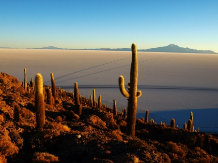 uyuni: Salt plains of Uyuni and Fishers island (Bolivia) Stock Photo