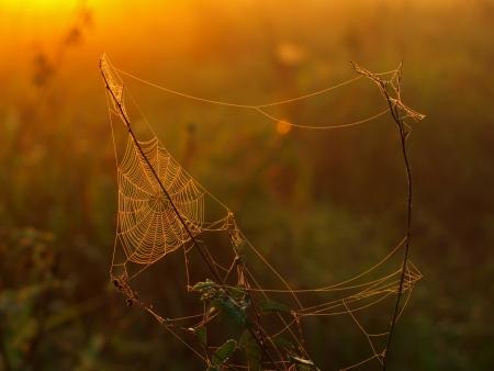 Spider web in morning sunlight (Bolivia)  photo