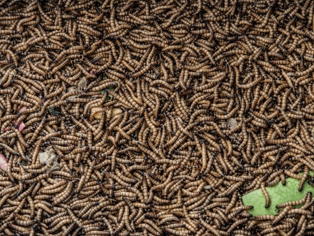 Worms in animal market  Kunming, Yunnan, China Stock Photo - 21265010