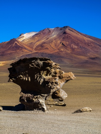 cranky: Famous stone tree in southern Bolivia Stock Photo