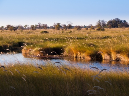 Landscape at Okavango river (Mopane Tongue, Moremi Game Reserve, Botswana) 免版税图像