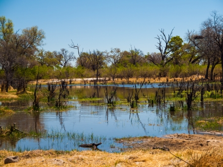Landscape at Okavango river (Mopane Tongue, Moremi Game Reserve, Botswana) Stockfoto