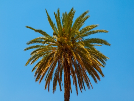 Palm on bright blue sky background photo