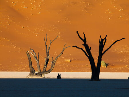 Morning is coming in Sossusvlei (Namib desert, Namibia) photo