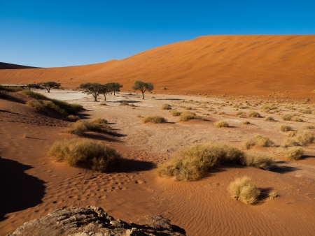 Dead acacia trees and red dunes of Namib desert (Namib Naukluft National Park, Namibia) photo