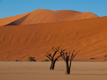 Dead trees in Sossusvlei (Namib desert, Namibia) photo