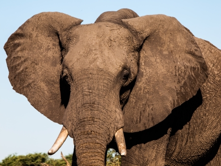 Detailed view of elephants head in sunny day photo