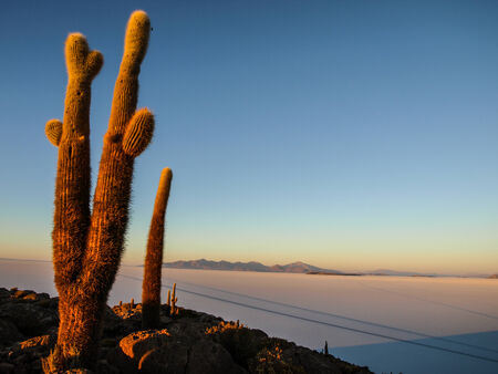 incahuasi: Incahuasi island in the middle of Salar de Uyuni and its cactus vegetation (Uyuni Salt Flat) Stock Photo