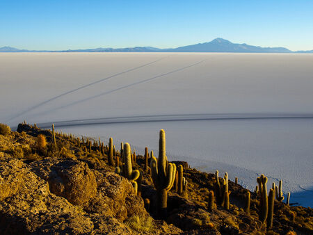 incahuasi: Incahuasi island in the middle of Salar de Uyuni and its cactus vegetation (Uyuni Salt Flat) Stock Photo