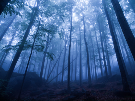 tinge: Mystic forest after rain in blue tinge Stock Photo