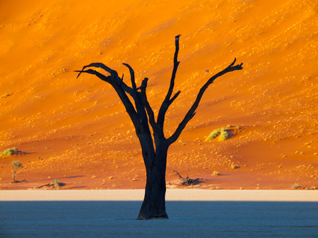 Tree silhouette in front of the red dune of Namib desert (Deadvlei, Namibia) photo
