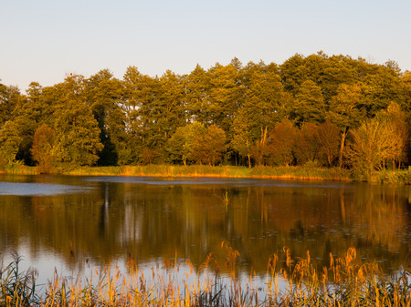 np: Evening lake reflection in Bielowieza NP (Poland)