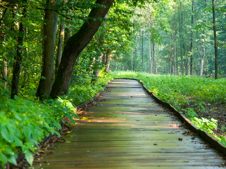 hiking path: Wooden path in forest after rain, Bialowieza, Poland