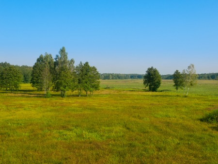 clear day: Green Siberian meadow with birches in summer clear day Stock Photo