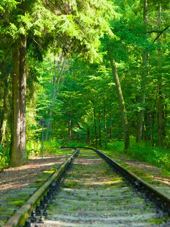 forest railroad: Railway track in the green forest passage