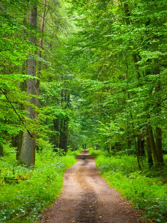 Endless forest road in Bialowieza National Park, Poland Imagens