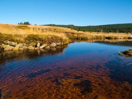 Peat bog near Jizerka Village, Czech Republic 스톡 콘텐츠